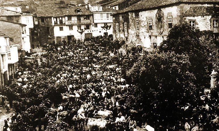 Feria de ganado Pontedeume
